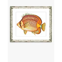 Tropical Fish 1 - Framed Print & Mount, 36 x 46cm, Orange