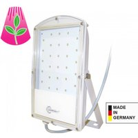 Astir LED plant light