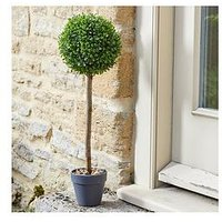 Product photograph showing Smart Solar Uno Topiary Tree 2 Pack