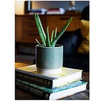 Product photograph showing Ivyline Real Aloe Vera Plant In Green Pot