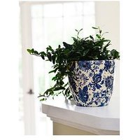 Product photograph showing Ivyline Real Green Ivy Plant In Blue White Pot