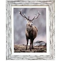 Product photograph showing Arthouse Highland Stag Framed Print