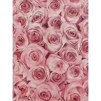 Product photograph showing Arthouse Rose Wall Raspberry Wallpaper