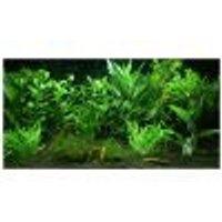 Set di piante per acquario Zooplants Giardino Eden 12 piante