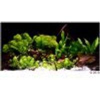 Set di piante per acquario Zooplants Mondo Esotico 14 piante