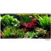 Set di piante per acquario Zooplants Teatro verde XXL 33 piante