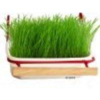 Ricarica di erba per uccelli Mucki 2 vaschette con erba