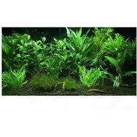 12 plantes d'aquarium Zooplants