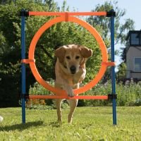 Aro Agility Fun & Sport - 1 set