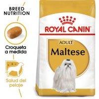 Royal Canin Bichón Maltés Adult - 4 x 1,5 kg - Pack Ahorro