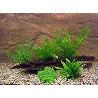 Aquarienpflanzen Zooplants Garnelen und Zwergkrebs Sortiment - 5 Pflanzen