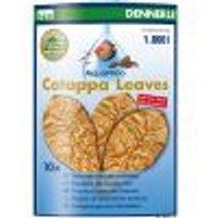 Dennerle foglie di mandorlo indiano 10 foglie