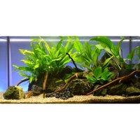 "Aquarienpflanzen Zooplants ""Barschbecken"" - 7 Pflanzen"