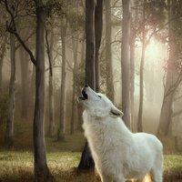 Wolf of Wilderness Senior Saver Pack 24 x 800g - Wild Hills - Duck