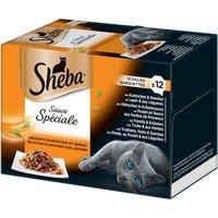 Sheba Tray M...