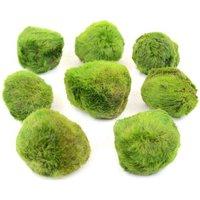 Aquarienpflanzen Zooplants Moosball-Set - 8 Moosbälle