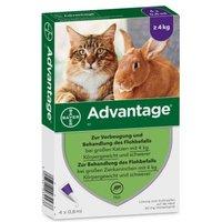 Advantage® für Katzen und Zierkaninchen - 40 mg: 4 Pipetten x 0,4 ml