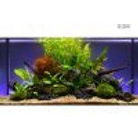 Set piante per acquario Zooplants Assortimento Misto 13 piante