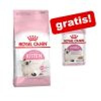 Royal Canin Kitten + 4 x 85 g umido Royal Canin Kitten misto gratis! 10 kg