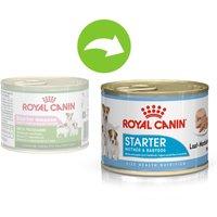 Royal Canin Starter Mousse Mother & Babydog pour chien - 48 x 195 g
