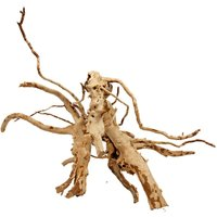 Red Root from the Moors Medium - 2 roots 21-40 cm