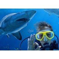 Shark Dive Xtreme at SEA LIFE Sydney Aquarium