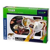 Thames & Kosmos Tiger Anatomy