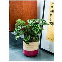 Ivyline Bamboo Pink Planter