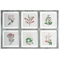 Product photograph showing Arthouse Botanical Multi Aperture Framed Print