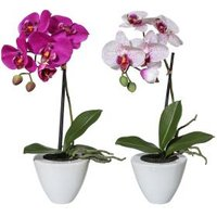 Orchideen 2er Set, lila/fuchsia, mit weißem Topf