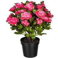 Azalee pink, 32 cm, im Kunststofftopf