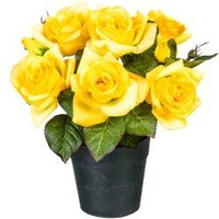 Rosenbusch im Kunststofftopf, gelb, 24 cm