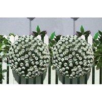 Floral Hanging Bay Balls White