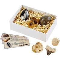 Fossil Collection Pack