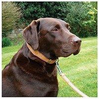 Wag n Walk Black Leather Collar 14-18