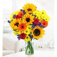Summer Sunflowers - Free Chocs