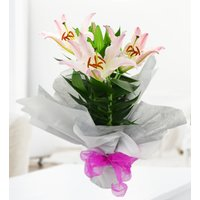 Lily Plant - Free Chocs - Indoor Plants - Plant Delivery - Next Day Plant Delivery - Birthday Gifts - Next Day Birthday Gifts