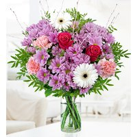 Cerise - Free Chocs - Carnations, Geminis, Cerise - Flower Delivery
