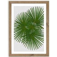Fan Palm Art Print Oak Frame