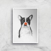 Balazs Solti Red Nosed Bulldog Art Print - A2 - White Frame