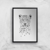 Balazs Solti Leopard Art Print - A4 - Black Frame