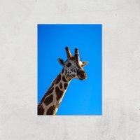 Giraffe Giclee Art Print - A4 - Print Only - Giraffe Gifts