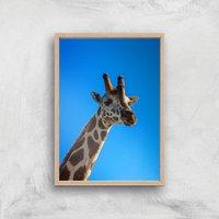 Giraffe Giclee Art Print - A4 - Wooden Frame - Giraffe Gifts