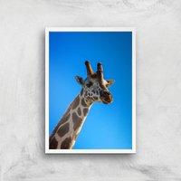 Giraffe Giclee Art Print - A4 - White Frame - Giraffe Gifts
