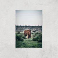 Wandering Elephant Giclee Art Print - A4 - Print Only