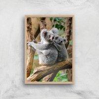 Koala Bear Giclee Art Print - A3 - Wooden Frame