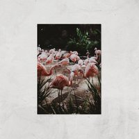 A Pat Of Flamingos Giclee Art Print - A3 - Print Only