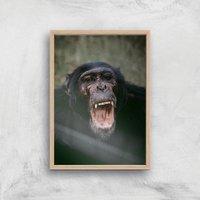 Chimpanzee Giclee Art Print - A4 - Wooden Frame