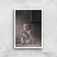 Baby Monkey Giclee Art Print - A4 - White Frame - Baby Gifts