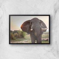 Curious Elephant Giclee Art Print - A3 - Black Frame
